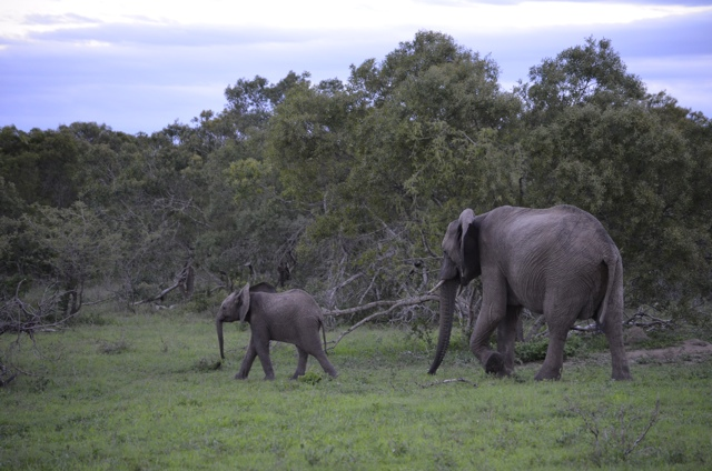 a memory of elephants