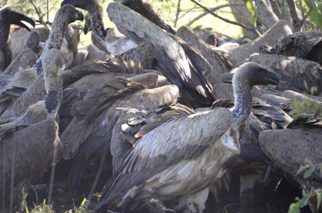 a venue of vultures