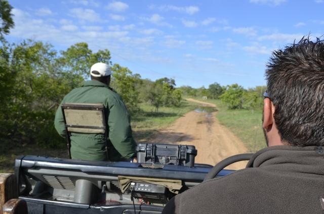 safari tips 04