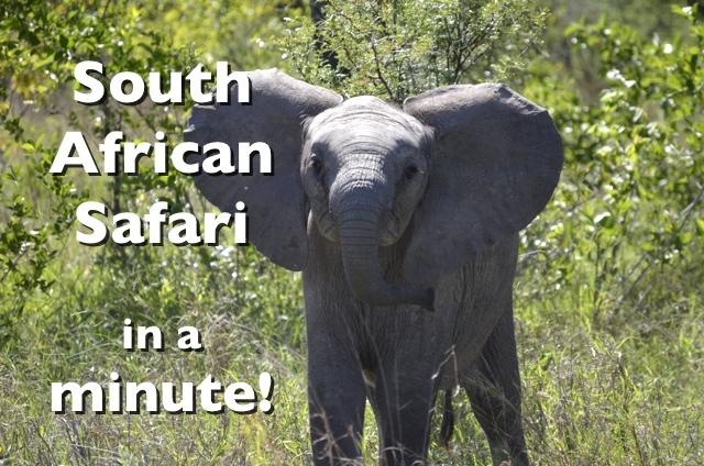 South African Safari in a Minute #Video