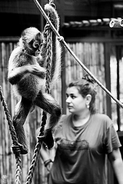 costa rica monkey 14