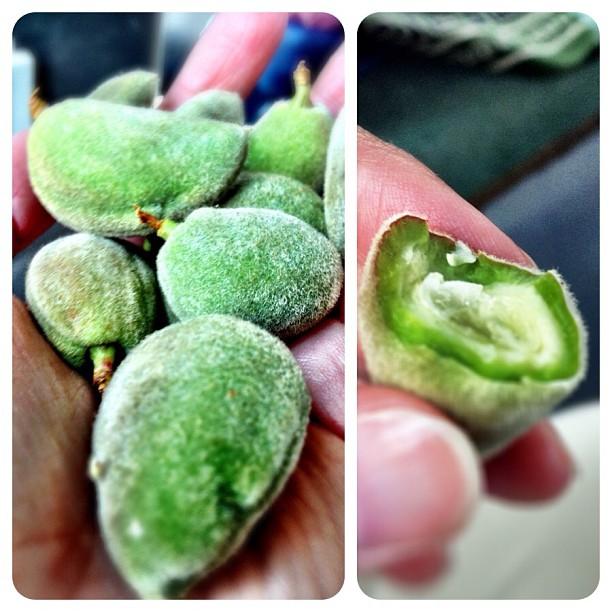 6 fuzzy almonds jordan