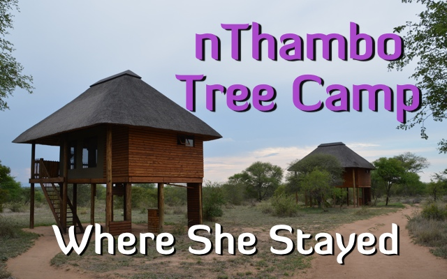 Staying at the nThambo Tree Camp