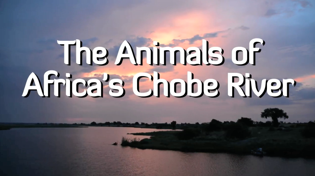 The Animals of Africa's Chobe River