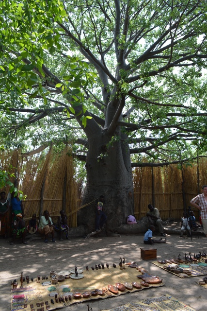 a baobab tree in a namibian village - staying aboard the zambezi queen houseboat