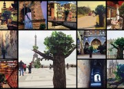 You Are Not a Tree So Travel #video