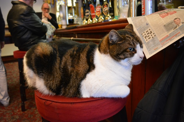 lenny the pub cat at the pride of spitafields pub - eating london food tour review
