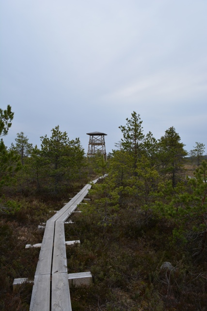 Kõnnu Suursoo vaatetorn bog watchtower - A Bog Walking Adventure in Estonia