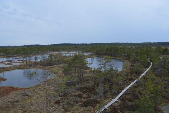 bogs as far as the eye could see - A Bog Walking Adventure in Estonia