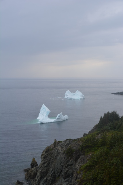 icebergs floating by the shore in Twillingate, Newfoundland - Seeing Icebergs in Newfoundland