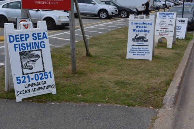 Whale watching and deep sea fishing ours in Lunenburg - Lunenburg, Nova Scotia Best Things to See and Do