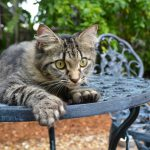Ernest Hemingway's Cats – the best part of the Florida Keys?