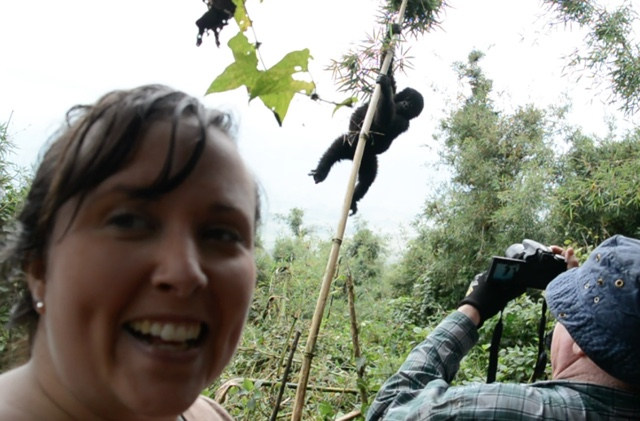 trying to get an epic selfie with a wild mountain gorilla in volcanoes national park rwanda - Trekking to see Wild Mountain Gorillas in Rwanda