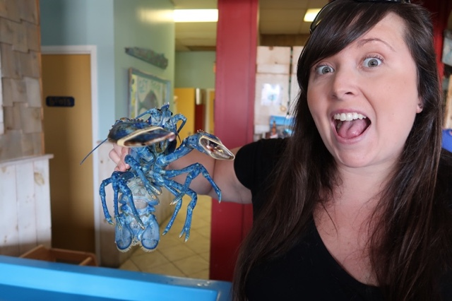 Cailin holding a bright blue lobster at Captain Kat's Lobster Shack - best Lobster Rolls on Nova Scotia's South Shore