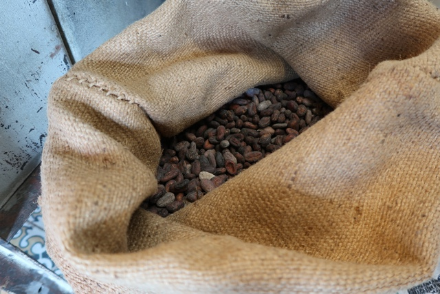 a burlap sack full of fermented cacao beans