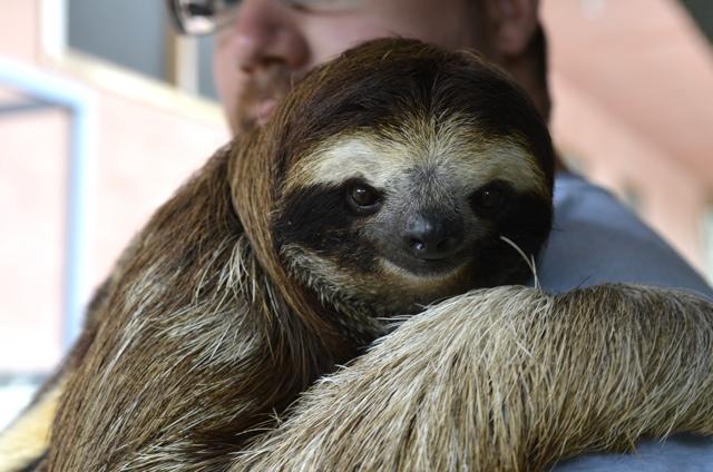 sloth 03
