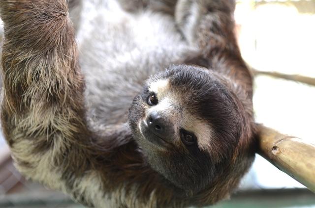 sloth 04