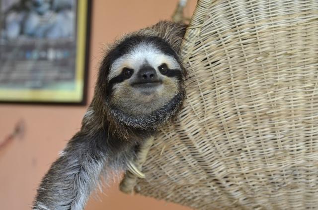 sloth 05