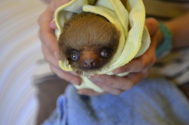 sloth 06