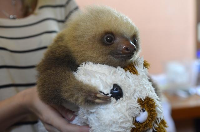 sloth 07