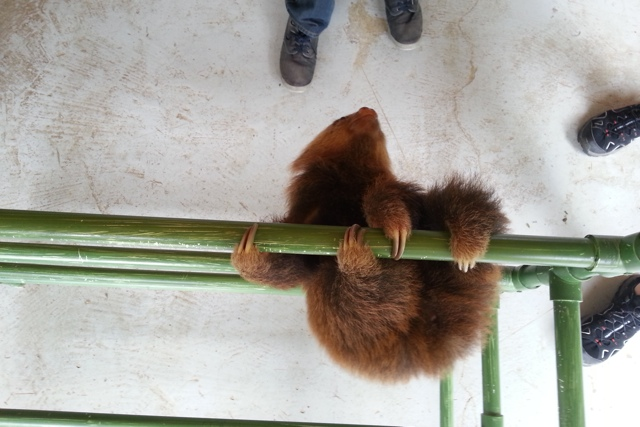 sloth 08