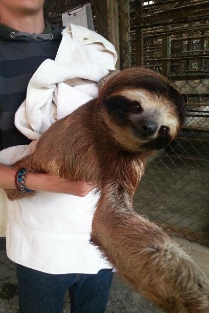 sloth 09