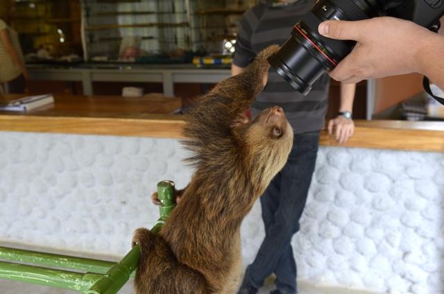 sloth camera 01