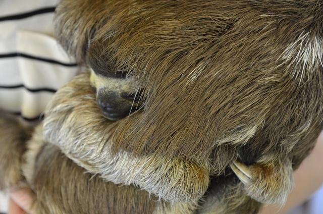 sloth hug 01