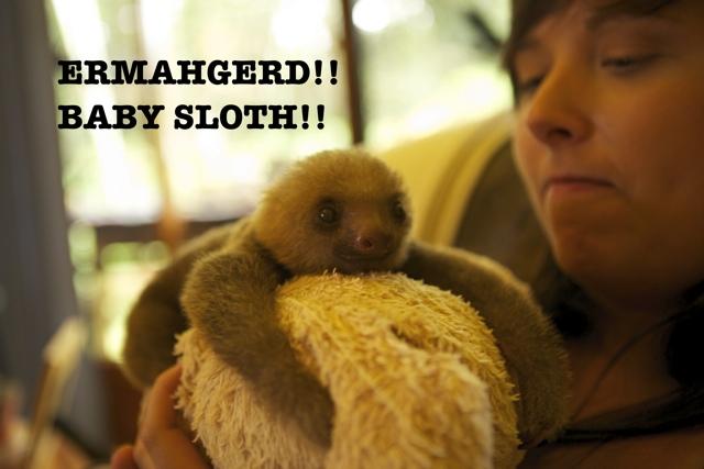ERMAHGERD!! BABY SLOTH