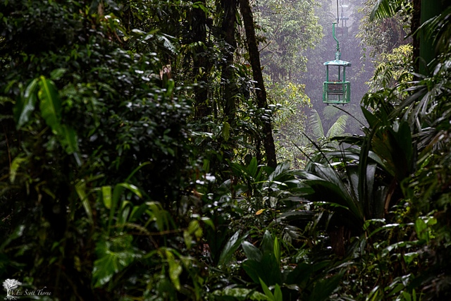 costa rica rain forest 18