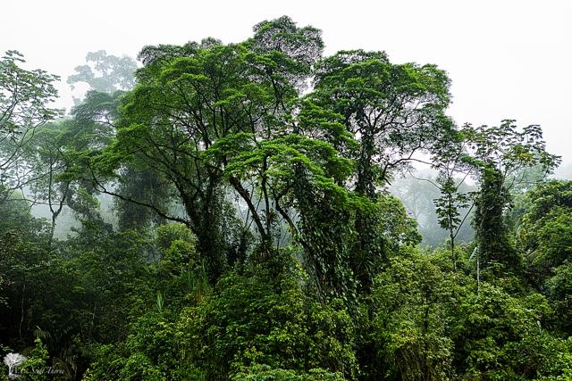 costa rica rainforest 20
