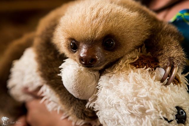 sloth facts oprah