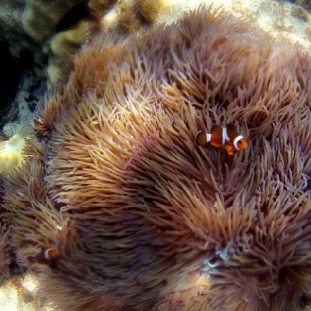 I found nemo - Malaysia as seen through instagram photos