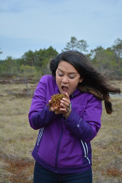 Tawny of Captina and Clark eats some moss - A Bog Walking Adventure in Estonia
