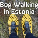 A Bog Walking Adventure in Estonia