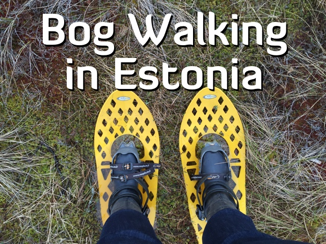 bog walking in estonia