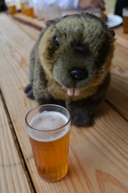 Paradox Brewery Beaver Bite IPA Beaver Approved - Exploring the Adirondacks in New York State