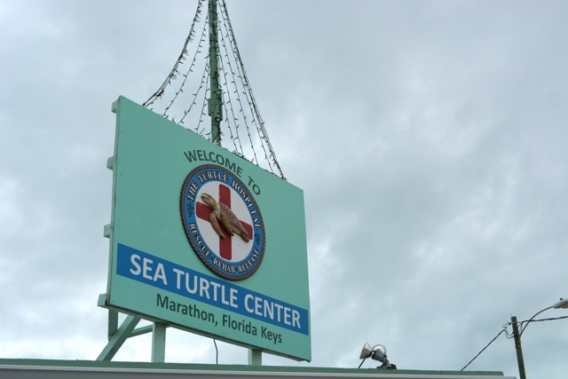 the turtle hospital in Marathon - The Best Things to do in the Florida Keys