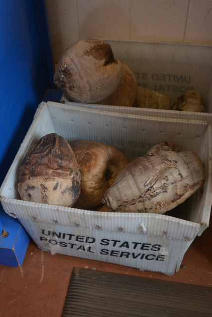 coconuts ready to be mailed at the Hoolehua post office in molokai - Best Tips for Visiting Molokai, Hawaii