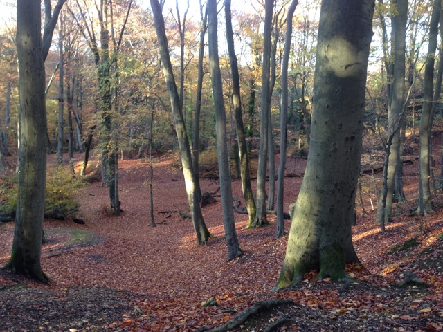 Burnham Beeches the exact location where Ron and Harry destroyed Slytherins Locket in part one of The Deathly Hallows