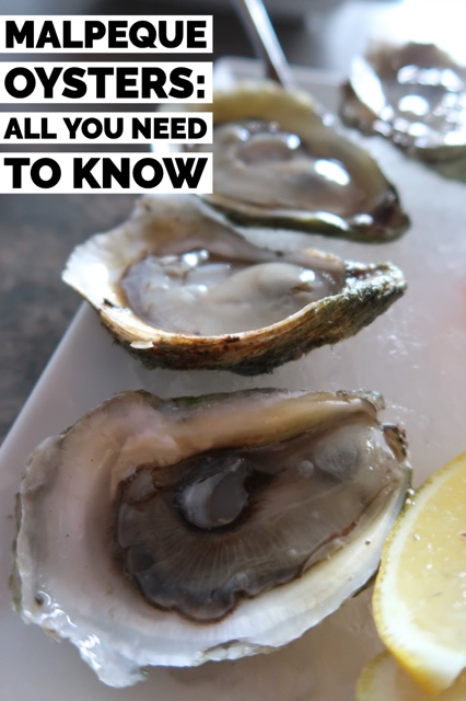 Malpeque Oysters- All You Need To Know